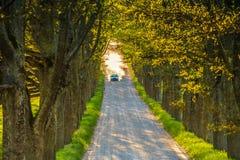 Väg på en ekgränd Grusväg damm, bil n Royaltyfri Foto