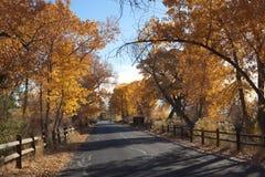 Väg som flankeras av Autumn Cottonwoods Arkivfoton