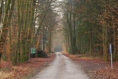 Väg som går till och med skogen i vinter Arkivbilder