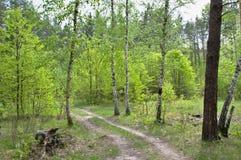 Väg som lämnar in i skogen Arkivfoto