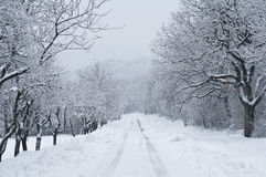 Väg som täckas av snow Arkivbilder