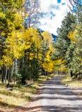 Väg till Autumn Aspens Fotografering för Bildbyråer