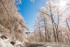 Väg till berget i vintern (Japan) Royaltyfri Foto