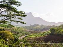 Väg till den Charmarel vattenfallet Mauritius Royaltyfria Foton