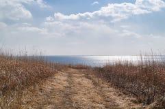 Väg till havet till och med ett fält av torrt gräs royaltyfria bilder