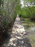 Väg till mangroveskogen, Songkhla, Thailand Royaltyfri Foto