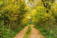 Väg till och med de höstskogen och fälten Fotografering för Bildbyråer