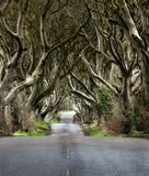 Väg till och med de mörka häckarna en unik väg n Ballymoney som för tunnel för bokträdträd är nordlig - Irland Lek av biskopsstol arkivbilder