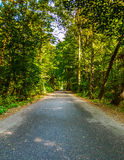 Väg till och med den gröna skogen Royaltyfria Foton
