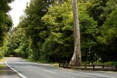 Väg till och med den nyazeeländska infödda busken royaltyfria bilder