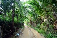 Väg till och med djungeln i Thailand Royaltyfri Fotografi