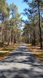 Väg till och med en skog Arkivfoton