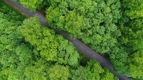 Väg till och med en skog - flyg- sikt arkivfilmer