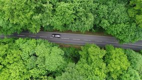 Väg till och med en skog - flyg- sikt stock video