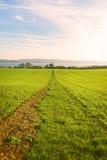 Väg till och med ett gräsfält som leder till en sjö Arkivfoton