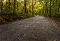 Väg till och med Gee Creek Forest Arkivfoton