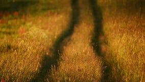Väg till och med gräs stock video