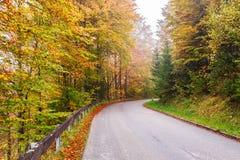 Väg till och med höstskog Arkivbilder