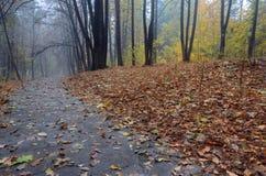 Väg till och med höstskog efter regn Royaltyfri Fotografi