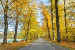 Väg till och med holländsk skog i höst royaltyfria foton