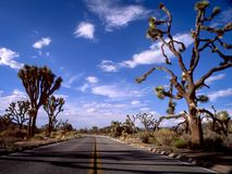 Väg till och med nationalpark för joshua träd Fotografering för Bildbyråer