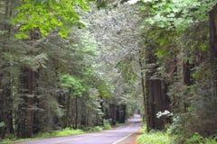 Väg till och med redwoodträden Fotografering för Bildbyråer