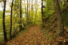 Väg till och med skog Royaltyfria Foton