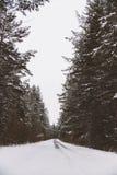 Väg till och med skog Fotografering för Bildbyråer