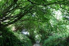 Väg till och med skog Royaltyfria Bilder