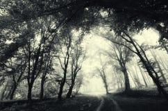 Väg till och med skog med dimma Mystiskt mörker spökad allhelgonaaftonplats royaltyfria foton