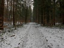 Väg till och med skog i vinter Arkivfoton