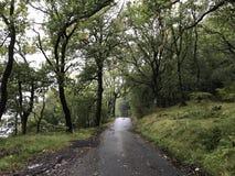 Väg till och med skog på en regnig dag arkivfoto