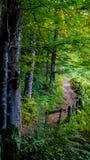 Väg till och med skogen arkivfoto