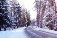 Väg till och med snöig skog Royaltyfri Foto