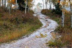 Väg till och med sydliga Utah Aspen Grove royaltyfria foton