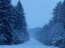 Väg till och med vinterskogen Royaltyfri Bild