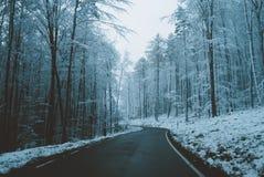 Väg till och med vintrig skog Royaltyfria Foton
