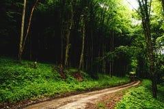 Väg till skogen Royaltyfria Bilder