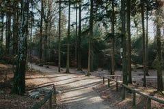Väg till skogen arkivfoton