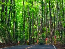 Väg till skogen för mahognyträd Royaltyfri Foto