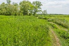 Väg till träd för en wild pitch och blomningakacia fotografering för bildbyråer