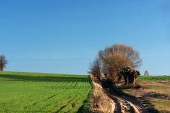 Väg, träd och grönt fält Royaltyfri Foto