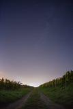 Väg under stjärnklar himmel Fotografering för Bildbyråer
