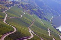 Vägar i en vingård Arkivbild