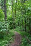 Vägen äger rum i en pinjeskogsommartid Arkivfoton