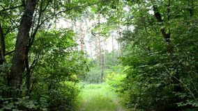 Vägen är i skogen stock video