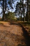 Vägen är på kanten av skogen Arkivfoton