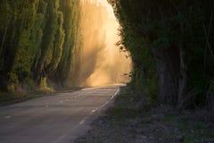 Vägen är tyst rök perspektiv arkivfoton