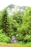 Vägen av floden från skogen Fotografering för Bildbyråer