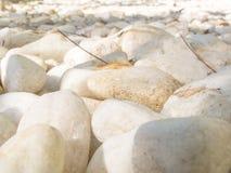 Vägen av vita Seixo kiselstenar stenar texturerad bakgrund Royaltyfri Bild